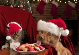 Edmonton shops with great gifts for furry companions