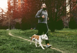 Dog-friendly spaces and activities in Toronto