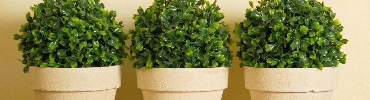 Trouvez la plante d'intérieur parfaite à Montréal