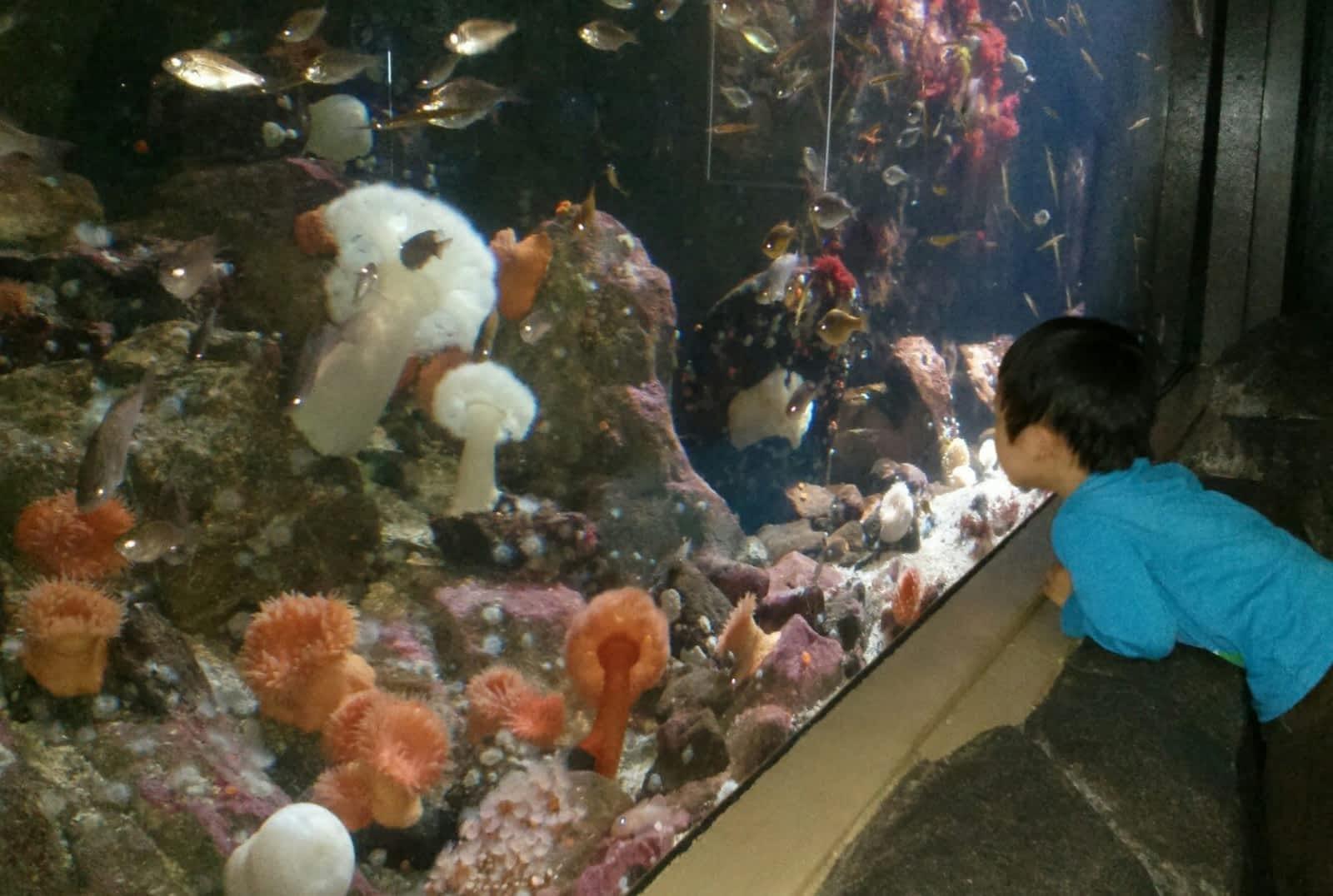 vancouver aquarium marine science centre opening hours 845 avison way vancouver bc