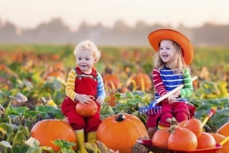 Embrace autumn at these family-friendly country farms