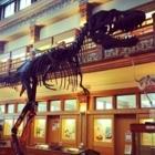 Musée Redpath - Musées - 514-398-4086