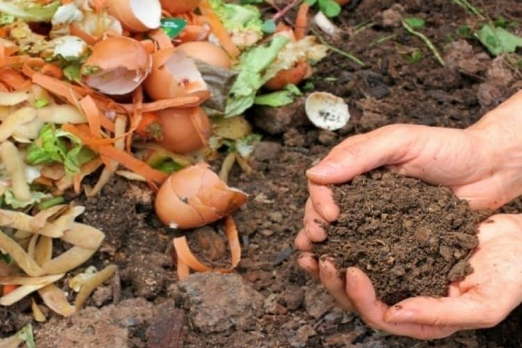 Conseils de compostage pour débutants
