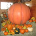 Laity Pumpkin Patch - Farms & Ranches - 604-467-4302