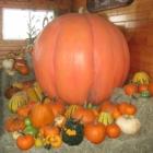 Laity Pumpkin Patch - Fermes et ranchs - 604-467-4302