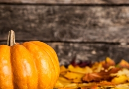 Fall into Edmonton's pumpkin madness while it lasts