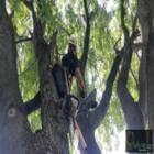 Arb'Attage - Service d'entretien d'arbres - 418-803-5747
