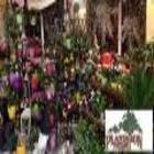 Plantation Flowers & Gifts - Florists & Flower Shops - 867-667-7177