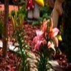 Sunshine Inn - Burns Lake - Hotels - 250-692-7696