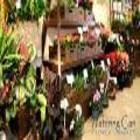 The Watering Can Flower Market - Florists & Flower Shops - 905-704-0088
