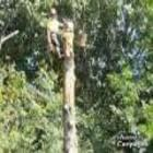 Morris The Treeman Ltd - Tree Service - 604-985-2828