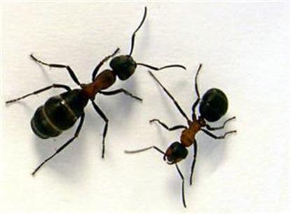 Aggressive Pest Control - Pest Control Services