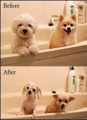 TLC Grooming And Sharpening Service - Pet Grooming, Clipping & Washing