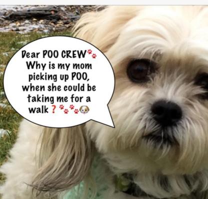 Poo Crew - Services pour animaux de compagnie - 204-800-9852