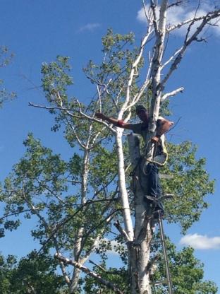 Ernest Yard Care & Renovations - Tree Service - 204-612-6101