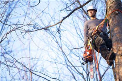 Arborex - Tree Service - 819-826-2396