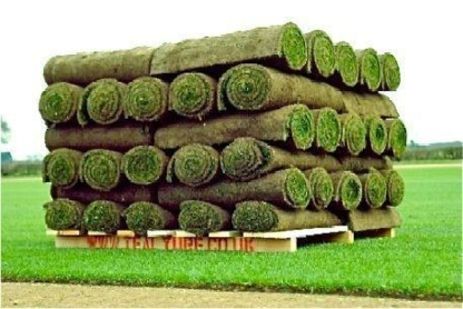 Farm Boy Turf - Farms & Ranches - 250-263-5992