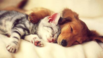 Henderson Animal Hospital - Pet Food & Supply Stores - 204-339-9295