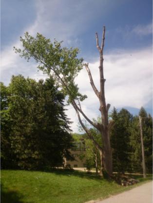Alpine Arborist - 416-509-2665