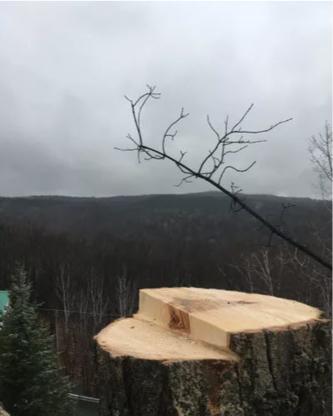 Élagage Frère D'arbres - Tree Service