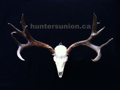 Hunters Union - Taxidermists