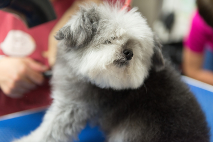 Pawsh Dog Spa & Boutique - Pet Grooming, Clipping & Washing