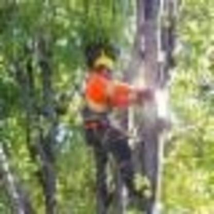 Arboriculture Rive-Sud - Tree Service - 514-688-1662