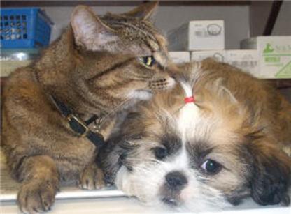 Coast Meridian Animal Hospital Ltd - Veterinarians - 604-941-0377
