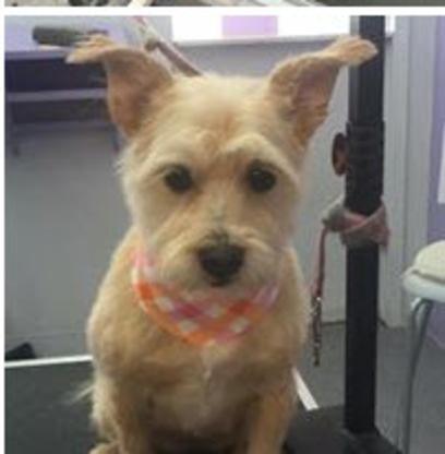 Bonnieland Puppy Parlor - Toilettage et tonte d'animaux domestiques - 587-577-7135