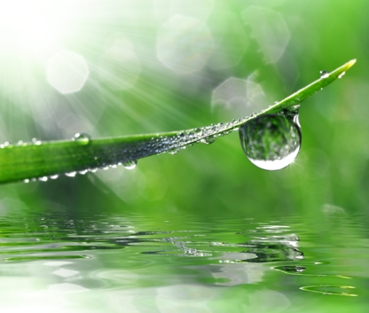 Nutrite Belle Pelouse - Lawn Maintenance - 418-662-7581