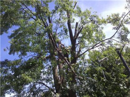 abattage arbre mascouche