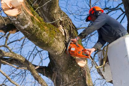 Shades of Green Tree Service