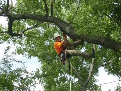 Executive Tree Services - Service d'entretien d'arbres - 403-795-1677