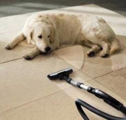 View Spring Clean Carpet Care's Edmonton profile