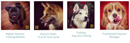 Dog Taxi Daycare & Hotel - Pet Care Services - 604-720-0358