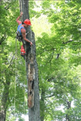 Entretien Arbres Guillaume Brossard Arboriculture Elagage Enr - Service d'entretien d'arbres