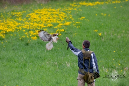 Island Falconry Services - Pest Control Services - 902-954-0357