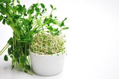 Choisir Cru - Aliments naturels et biologiques - 819-314-4877