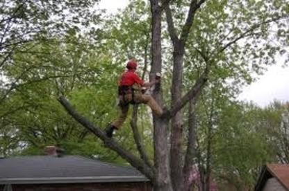 Toby's Tree Service - Excavation Contractors - 705-791-6052
