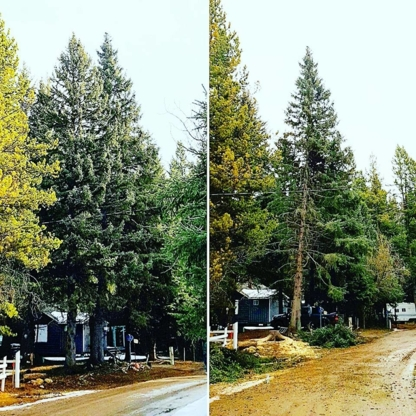 IntegriTree Services - Tree Service - 403-918-1317