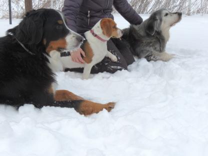 Les Amis de Toby - Garderie d'animaux de compagnie - 514-462-8091