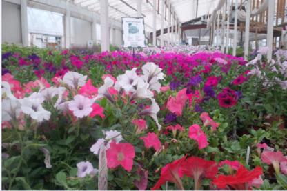 Ron Paul Garden Center - Centres du jardin