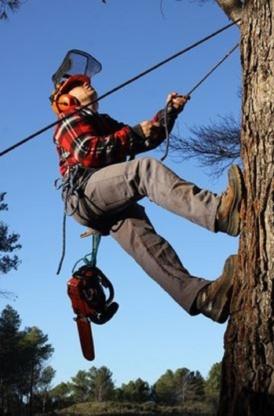 Émondage Yamaska - Service d'entretien d'arbres