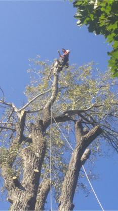 Émondage GL - Tree Service - 514-947-5353