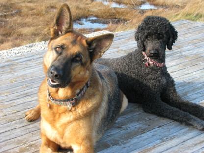 Riverside Dog Training Academy - Dressage et éducation d'animaux de compagnie - 506-532-8735