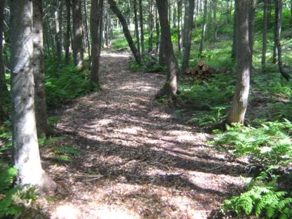 Aménagement Forestier RB - Service d'entretien d'arbres - 450-297-3258