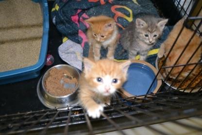 For Pets Sake - Pet Food & Supply Stores - 250-245-2226