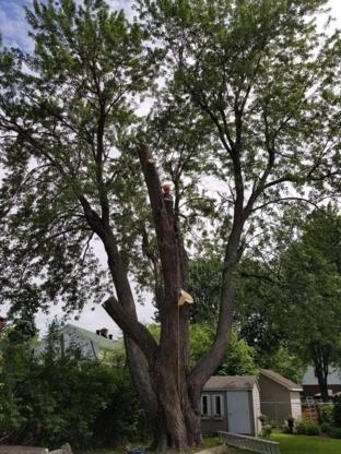 Abattage et Émondage Alexandre Cool - Tree Service - 514-898-8569