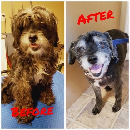 Flea's Professional Pet Grooming - Toilettage et tonte d'animaux domestiques - 902-304-4377