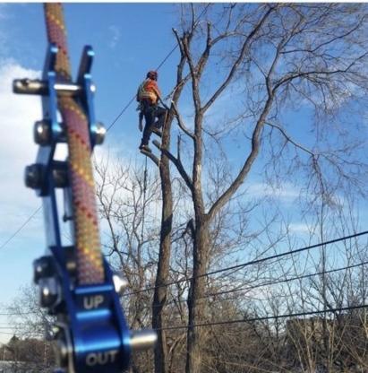 A&E Tree Service - Tree Service - 204-806-9993